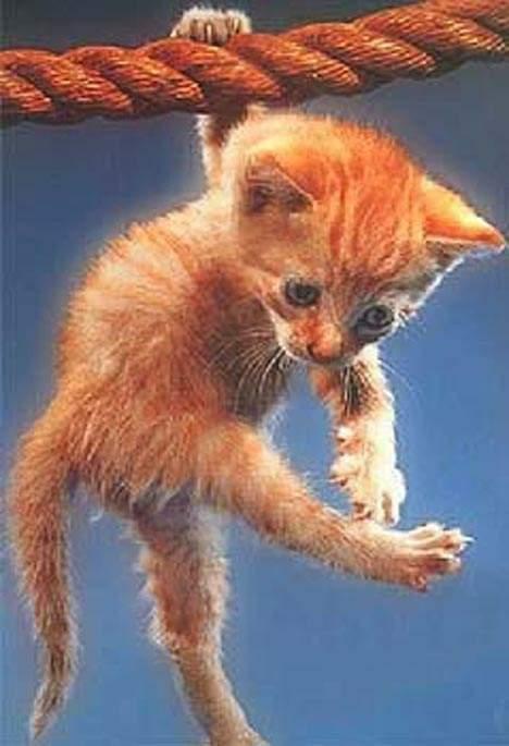 Кекс - кот канатоходец (видео)