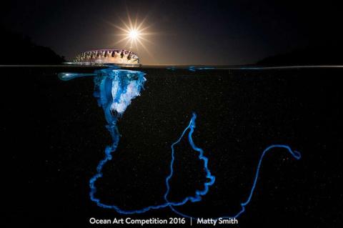 16 невероятных фото подводно…