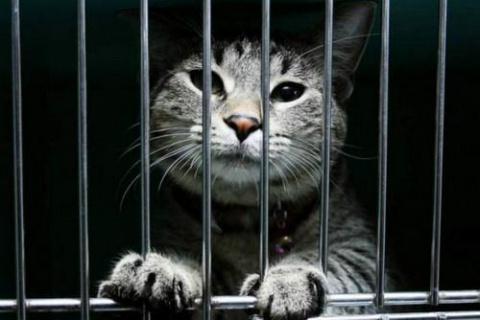 10 историй о животных-преступниках