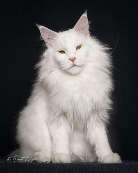 Обидно, когда твоего кота зо…
