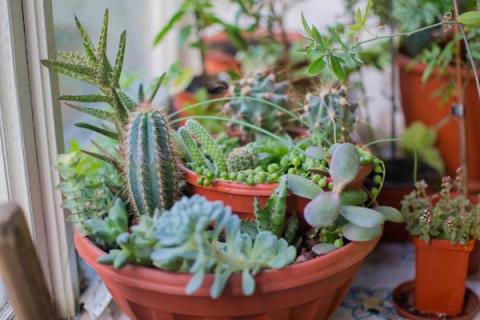Переделка домика для кактусо…