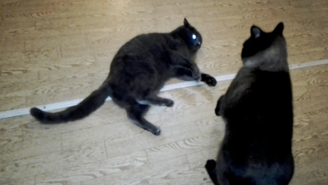 Мама кошка играет с сынком