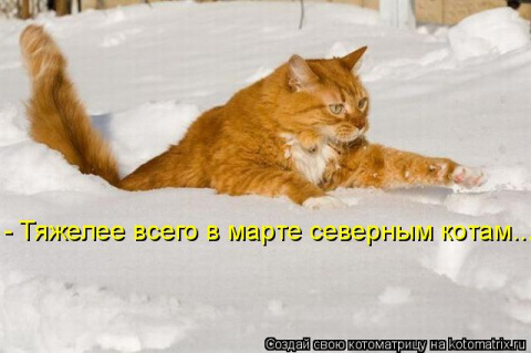 Мартовская котоматрица