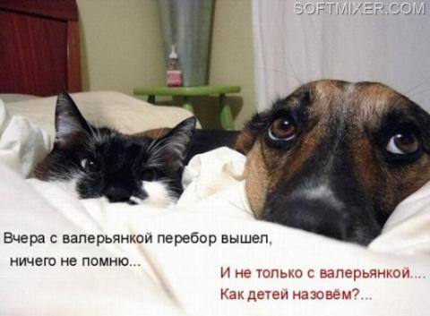 Наркотики для котиков