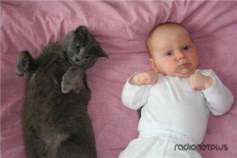 6 милых кошачьих повадок и и…