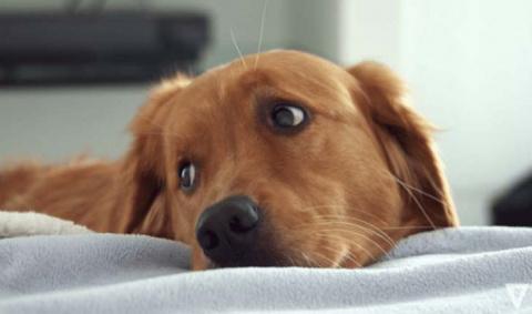 Собака из приюта никак не мо…