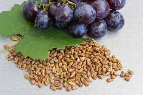 Вы будете удивлены: плодовые косточки иногда полезнее, чем сами фрукты ...
