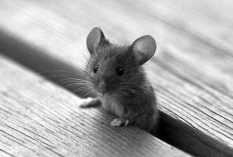 У нас завёлся Мышь...Мне не жалко, но  у нас не принято ходить ногами по столу!