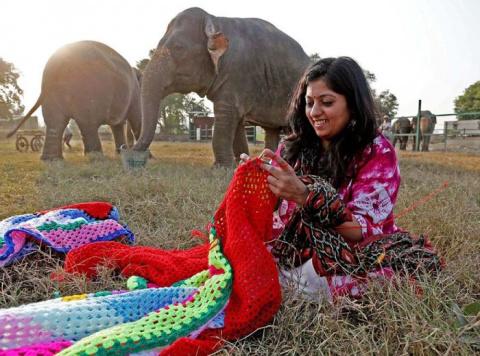 Индийских слонов спасают от …