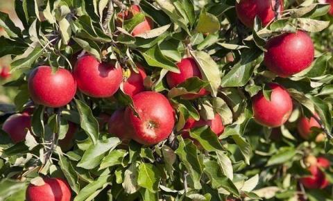 Что нужно сделать в плодовом…
