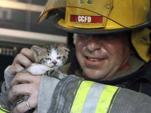 Животные, которых спасли хра…