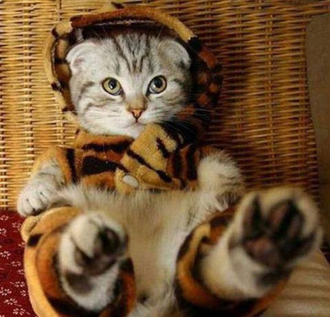 Забавные котейки (27 фото)