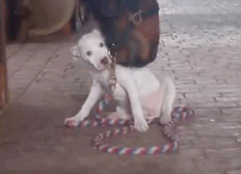 Лошадь стала лучшим другом д…