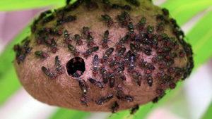 Самые жуткие укусы насекомых…