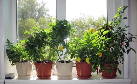 Как правильно подобрать растения для дома! Полезные идеи: дачные поделки из пластиковых труб