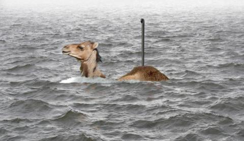 Верблюд-подводник