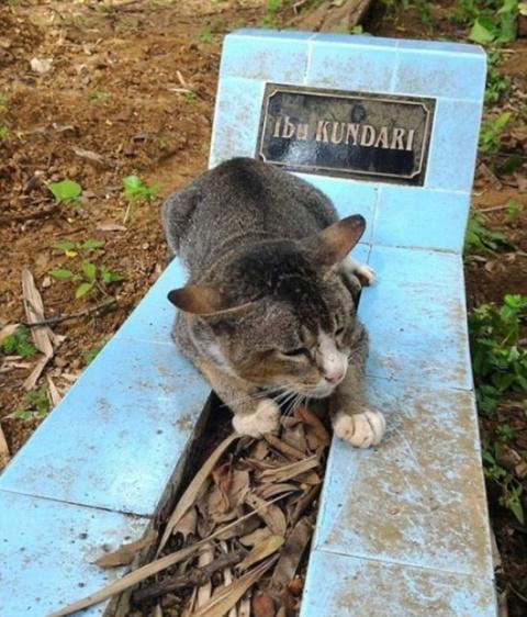 В Индонезии кошка целый год …