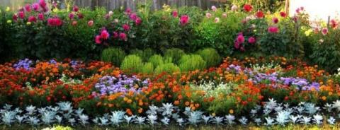 Многолетние дачные цветы для…