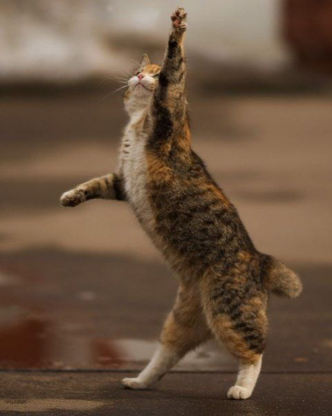 Кот полный радости!