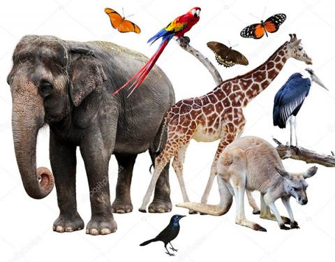 Выдра, пес и горилла, которых полюбила сеть
