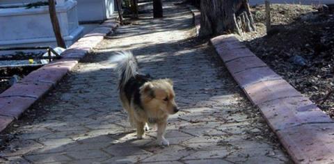 Собачка прибегает к могиле м…