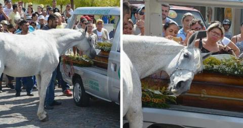 Конь пришел на похороны любимого хозяина, чтобы отдать ему последний долг