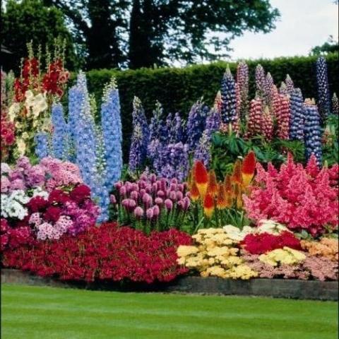 ТОП-10 самых популярных многолетних растений для сада