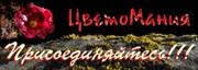 http://zveti09.mirtesen.ru
