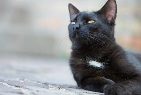 Отважный кот