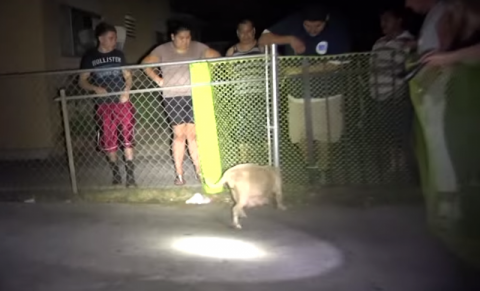 Собака рожает щенят, после ч…
