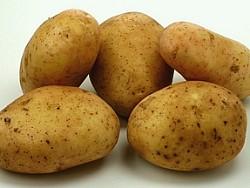 Картошка может подорожать