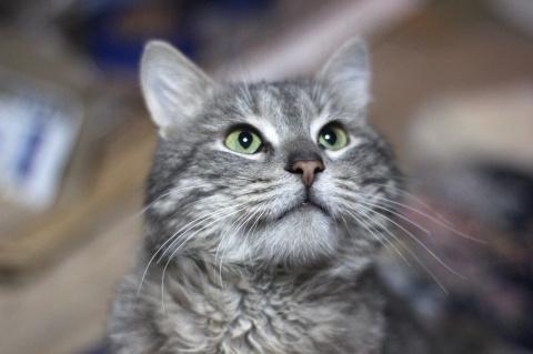 Особенный кот Живчик