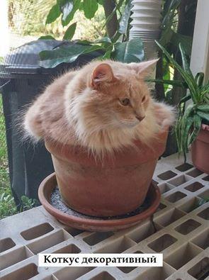 Маленькие истории котов в картинках-2