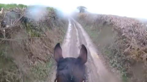 Неопытный наездник решил прокатиться на бывшей скаковой лошади. Зря!