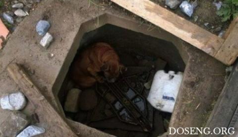 Спасение брошенной собаки