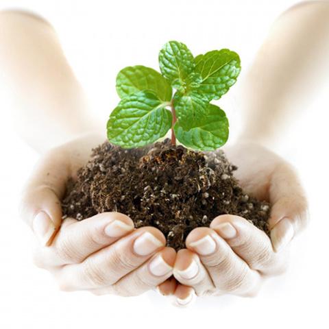 защита растений, природная защита растений, средства зажиты растений, народные средства защиты растений, подручные средства защиты растений, раствор марганцовки, борная кислота, в помощь садоводу, как защитить цветок, зеленая серия, аэрозольная побелка, аэрозольный садовый вар