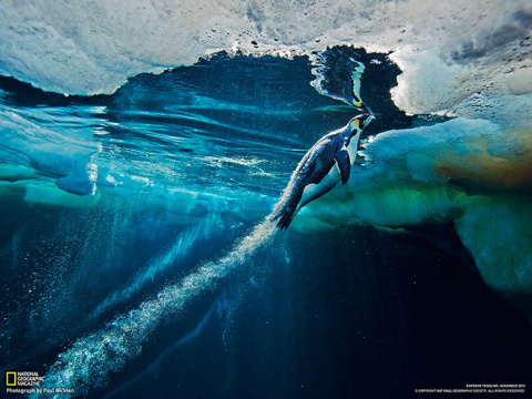 Лучшие фотографии National Geographic за март 2013