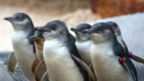 ТЕРЕМОК. 10 очаровательно крошечных версий животных