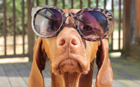 Самый серьезный пес в мире!