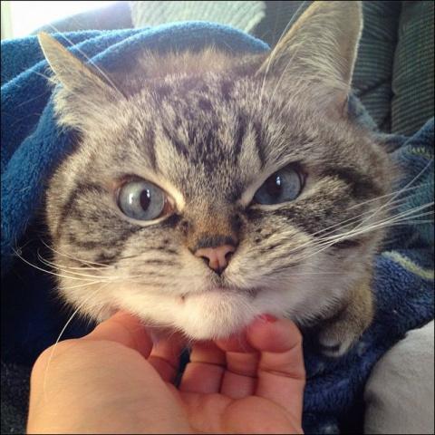 За милой внешностью скрываются коварные планы: самые злые коты интернета!