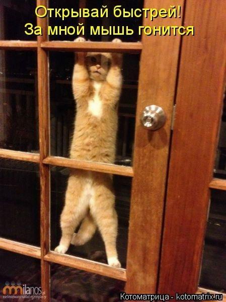 Почему коты не заходят, когд…