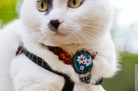 Самый умный кот Калининграда…