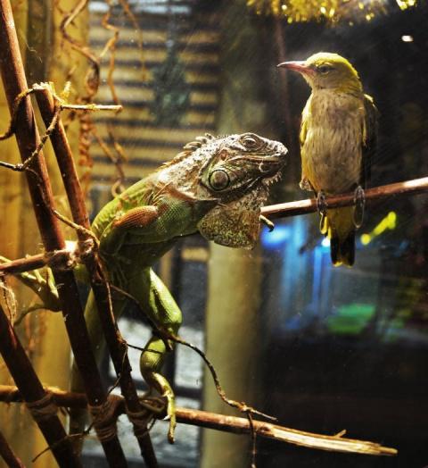 В уфимском зоопарке подружились маленькая птичка и большая ящерица