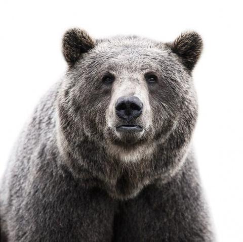 Фотографии животных от Morte…