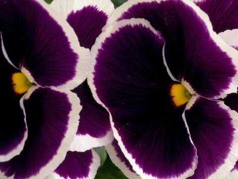 Узоры природы: флора