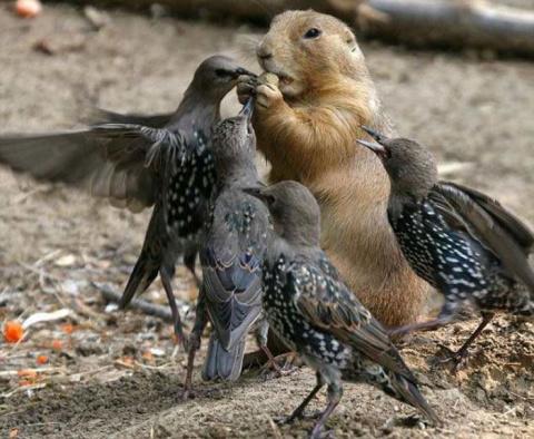 Подборка голодных птиц