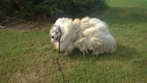Собака стала легче на 16 кг …