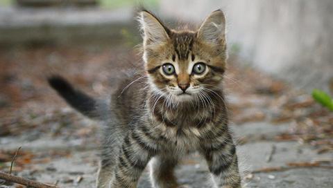 Второго избитого котенка нашли под Самарой, где дети убили кота