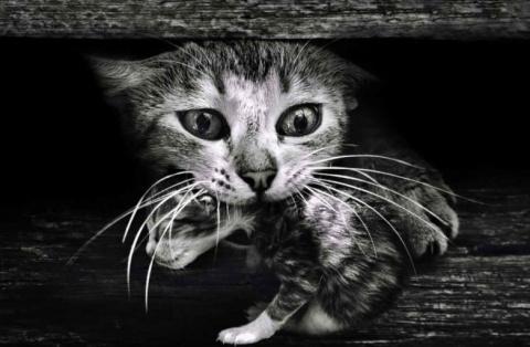 Кошки-мамочки