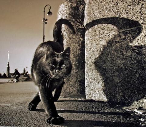 Черный кот Петербург